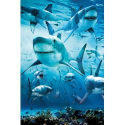 Poster Shark Infested