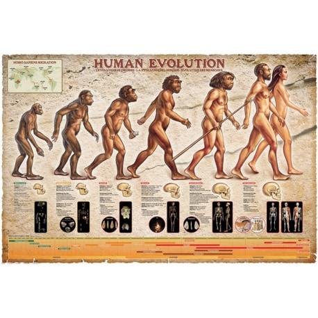 Poster Evolución Humana