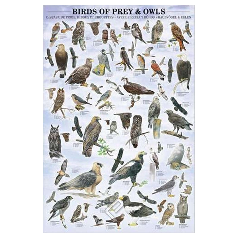 Poster Aves de Caza - Nosoloposters.com