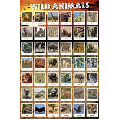 Poster Animales Salvajes