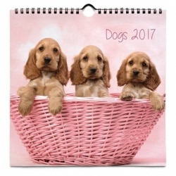 Calendario 24x24 2017 Perros