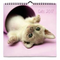 Calendario 24x24 2017 Gatos