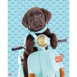 Mini Poster Studio Pets Perro Scooter