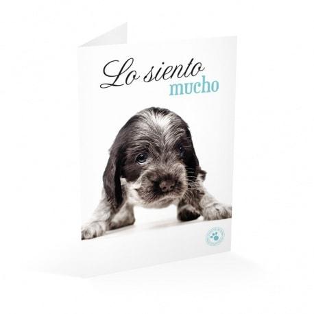 Tarjeta Felicitacion Studio Pets Lo Siento Mucho