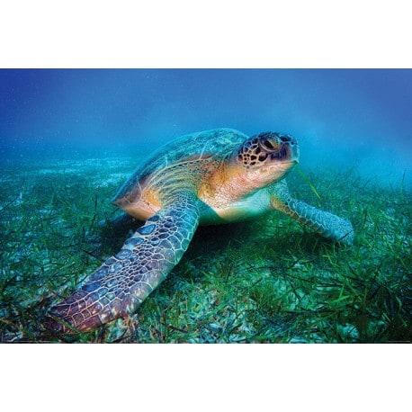 Poster Tortuga de mar