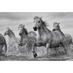 Poster Camargue Horses