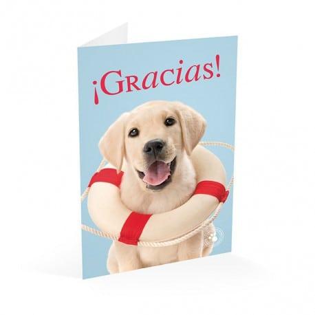 Tarjeta Felicitacion Studio Pets Labrador Gracias