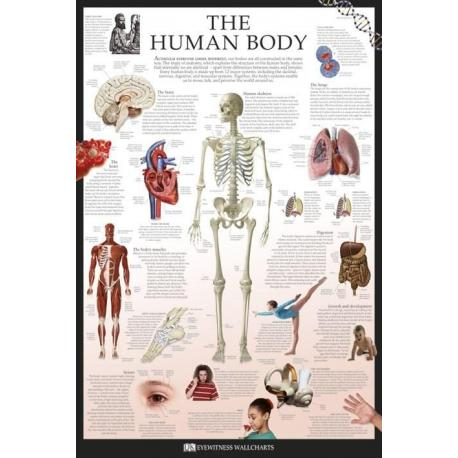 Poster Dk Human Body
