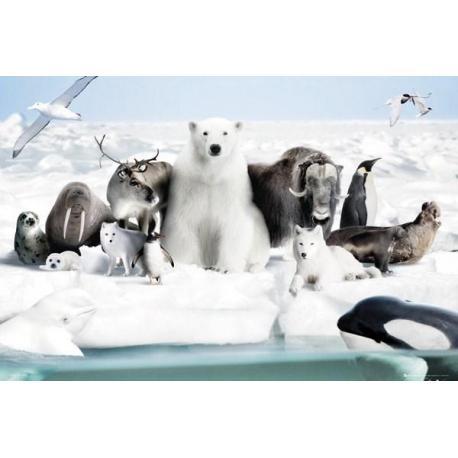 Poster Animales de nieve