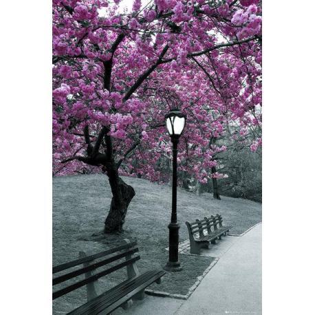 Poster Central Park Blossom