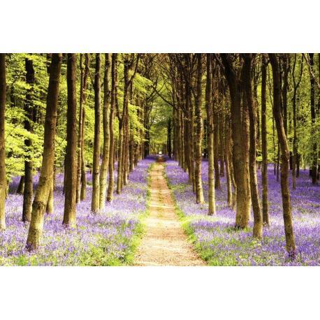 Poster Woodland Path