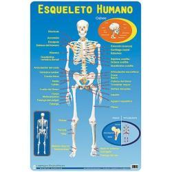 Lámina Educativa Tu Esqueleto