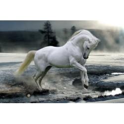 Poster Bob Langrish Horse Snow