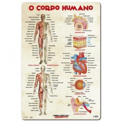Lamina Didactica Portugues O Corpo Humano