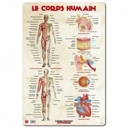 Lamina Educativa Frances Le Corps Humain