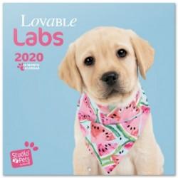 Calendario 2020 30X30 Studio Pets Labs