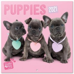 Calendario 2021 30X30 Studio Pets Puppies
