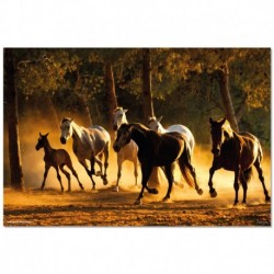 Poster Caballos Andaluces