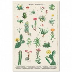 Poster Botanical Cacti
