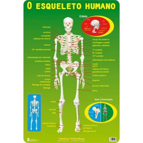 Las l minas educativas o esqueleto portugal de mejor - Laminas y posters madrid ...