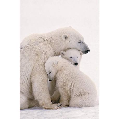 Poster Familia Oso Polar
