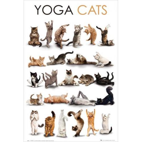 Maxi Poster Yoga Cats