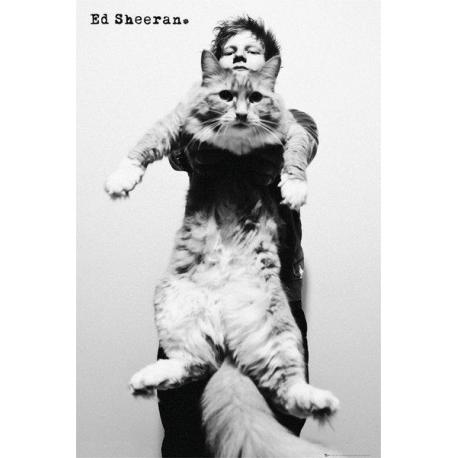 Maxi Poster Ed Sheeran Cat