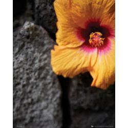 Mini poster Flowers Stone Wall