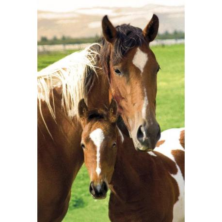 Maxi Poster Horses Mare and Foal