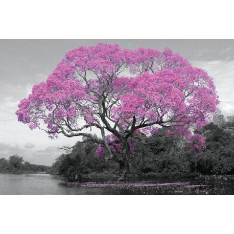 Maxi Poster Tree Blossom
