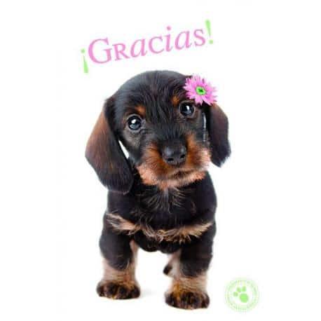 Tarjeta Felicitacion ¡Gracias!