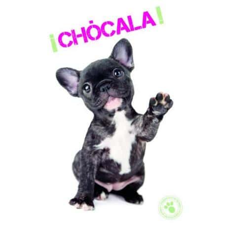 Tarjeta Felicitacion ¡Chocala!