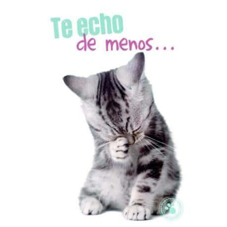 Tarjeta Felicitacion Te Echo De Menos