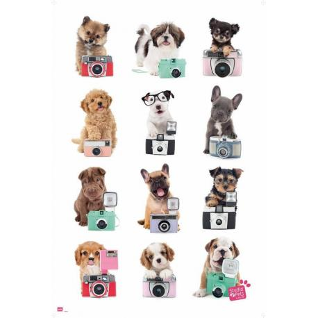 Poster Studio Pets Perros Cámara