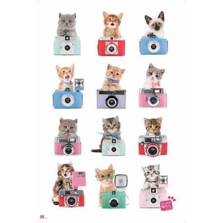 Poster Studio Pets Gatos Cámara
