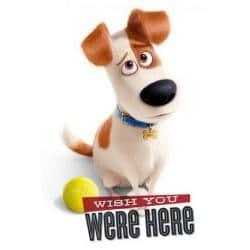 Poster La Vida Secreta de las Mascotas - Deseo que estes aquí